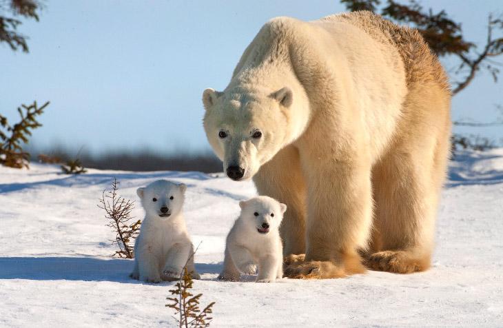Ученые сняли на видео тюленя-каннибала - Вести России